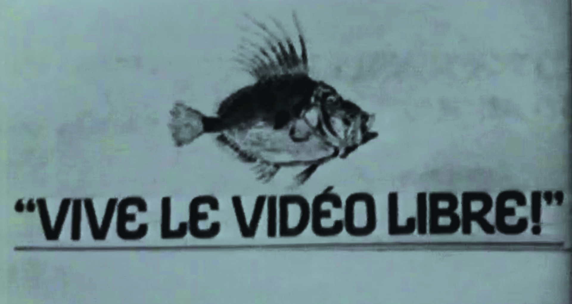 Black and white. A big fish. « Long live the free video! »