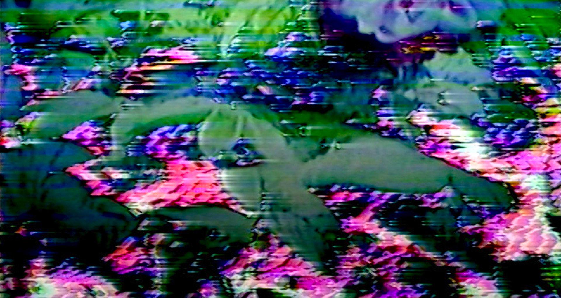 image couleur, glitch vidéo, plantes